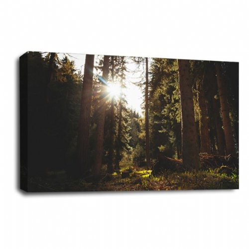 Forest Sunset Canvas Art Wood Trees Wall Picture Print